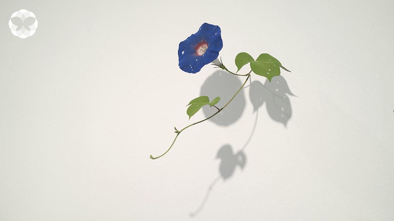 'ศิลปะดอกไม้' ที่เบ่งบานจากร่องรอยคอนกรีตแตกร้าว