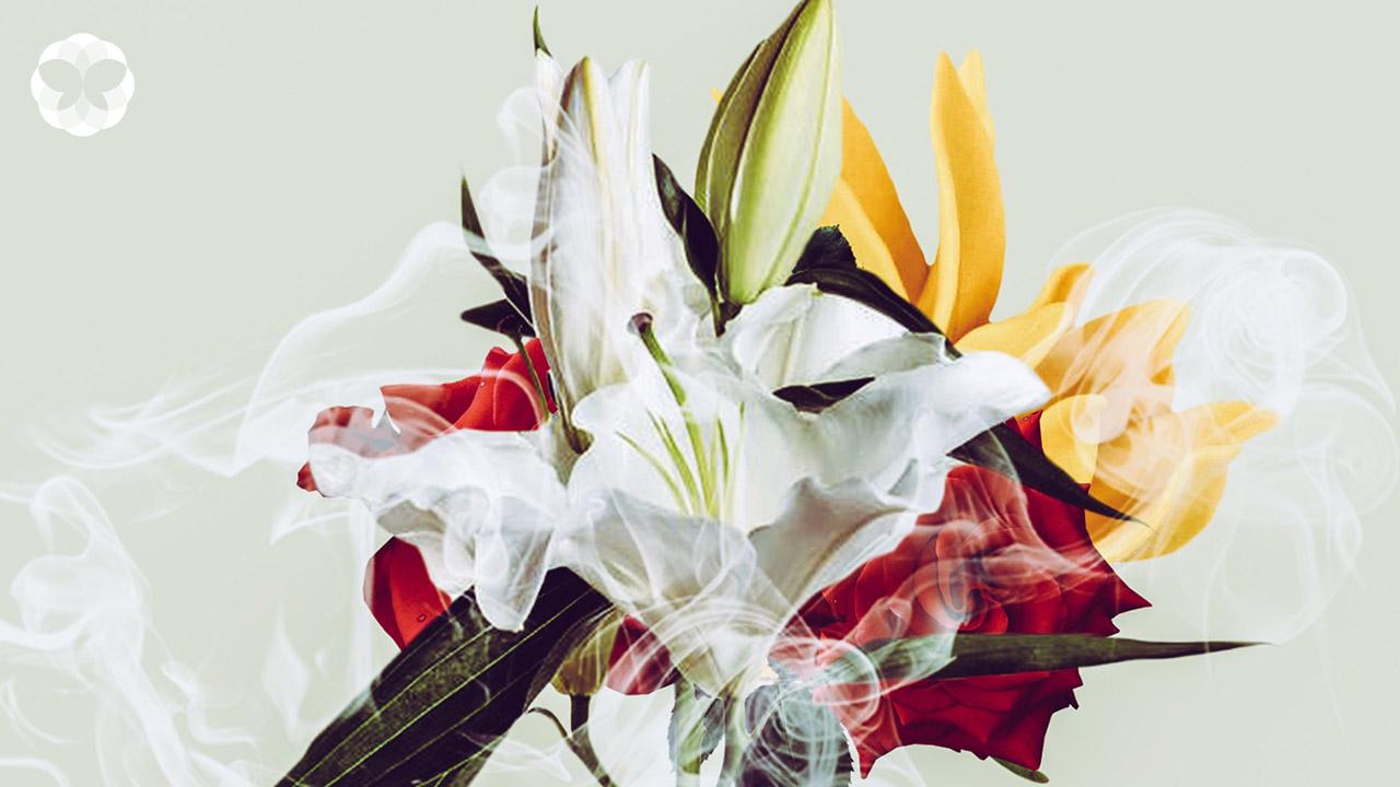 10 สุคนธบำบัดจากดอกไม้ใกล้ตัว ผ่อนคลายได้แบบไม่ต้องง้อสปา