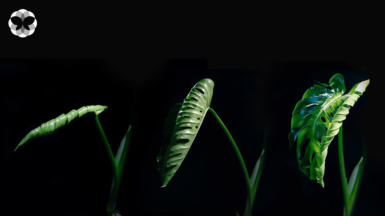 Plant Therapy ประโยชน์ทางจิตใจจากการปลูกต้นไม้
