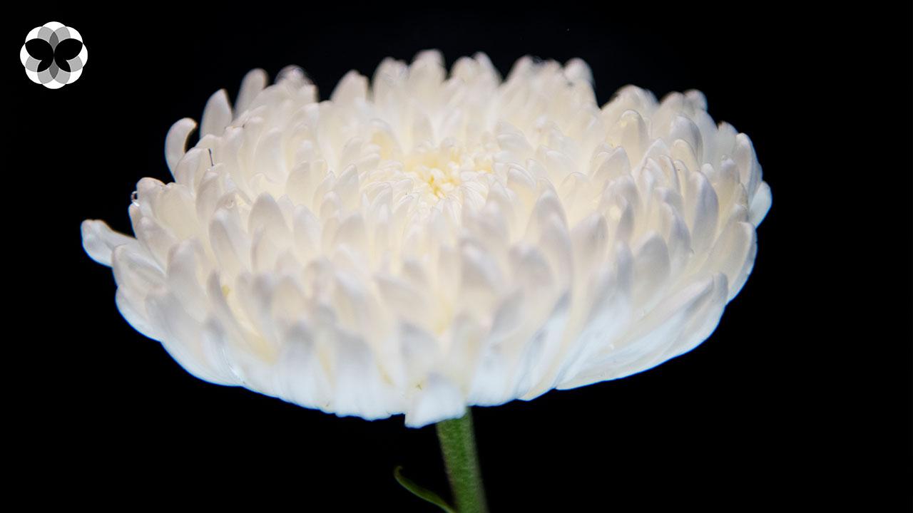 บอกลาด้วยความรักจากดอกไม้ บุปผายามนิราลัย