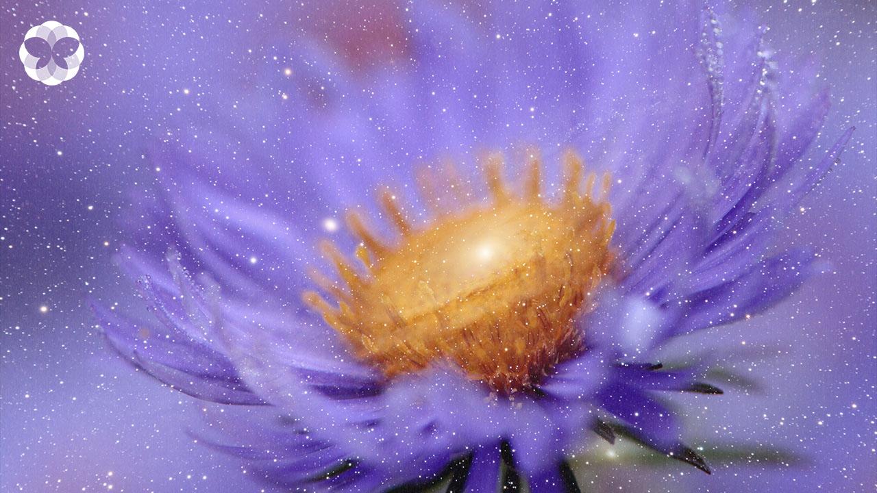 'ดอกคัตเตอร์' ตำนานดวงดาวบนพื้นดิน