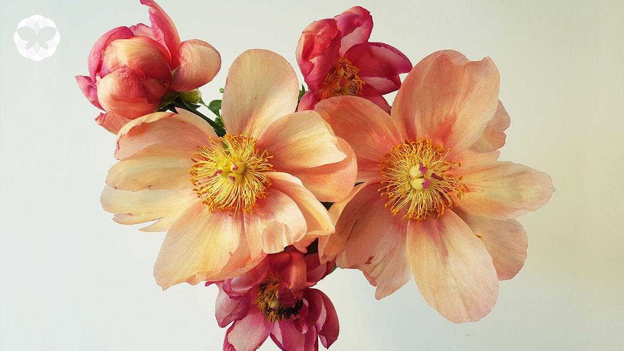 ดอกไม้เสริมดวงของเหล่าหนุ่มสาวออฟฟิศ