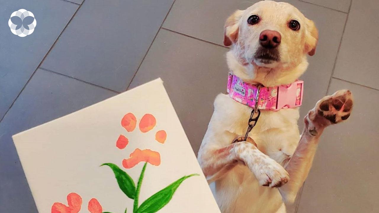 กระชับสัมพันธ์เจ้าของและเจ้าตูบด้วย 'รูปวาดดอกไม้จากอุ้งเท้าน้องหมาแต้มสี'