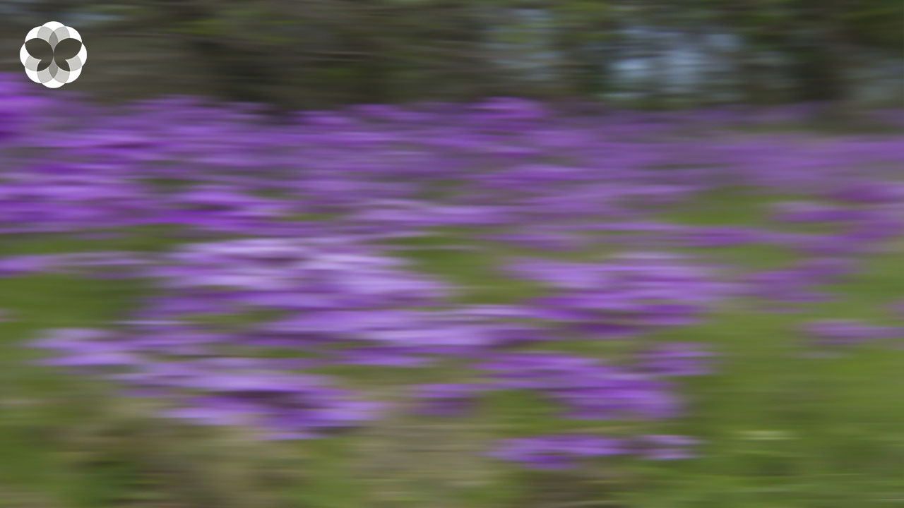 คู่มือการชมดอกไม้ป่าบนรถด้วยความเร็วสูง (ฉบับเบลอ)