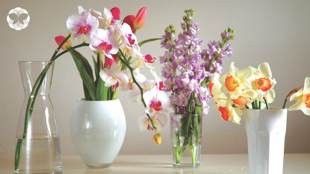 9 วิธียืดอายุดอกไม้ให้เบ่งบานนานกว่าที่เคย เพราะความสวยชะลอได้