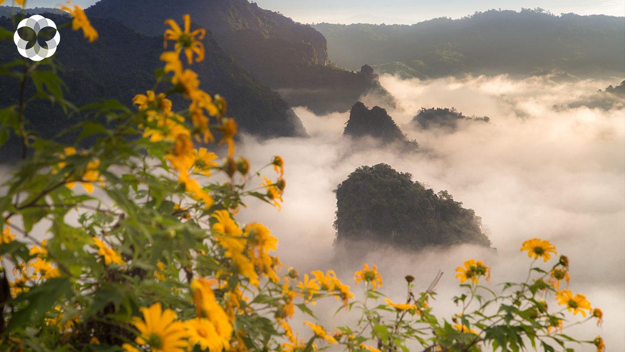 ปักหมุด 5 ทุ่งดอกไม้ป่า ตระการตารับปลายฝนต้นหนาว