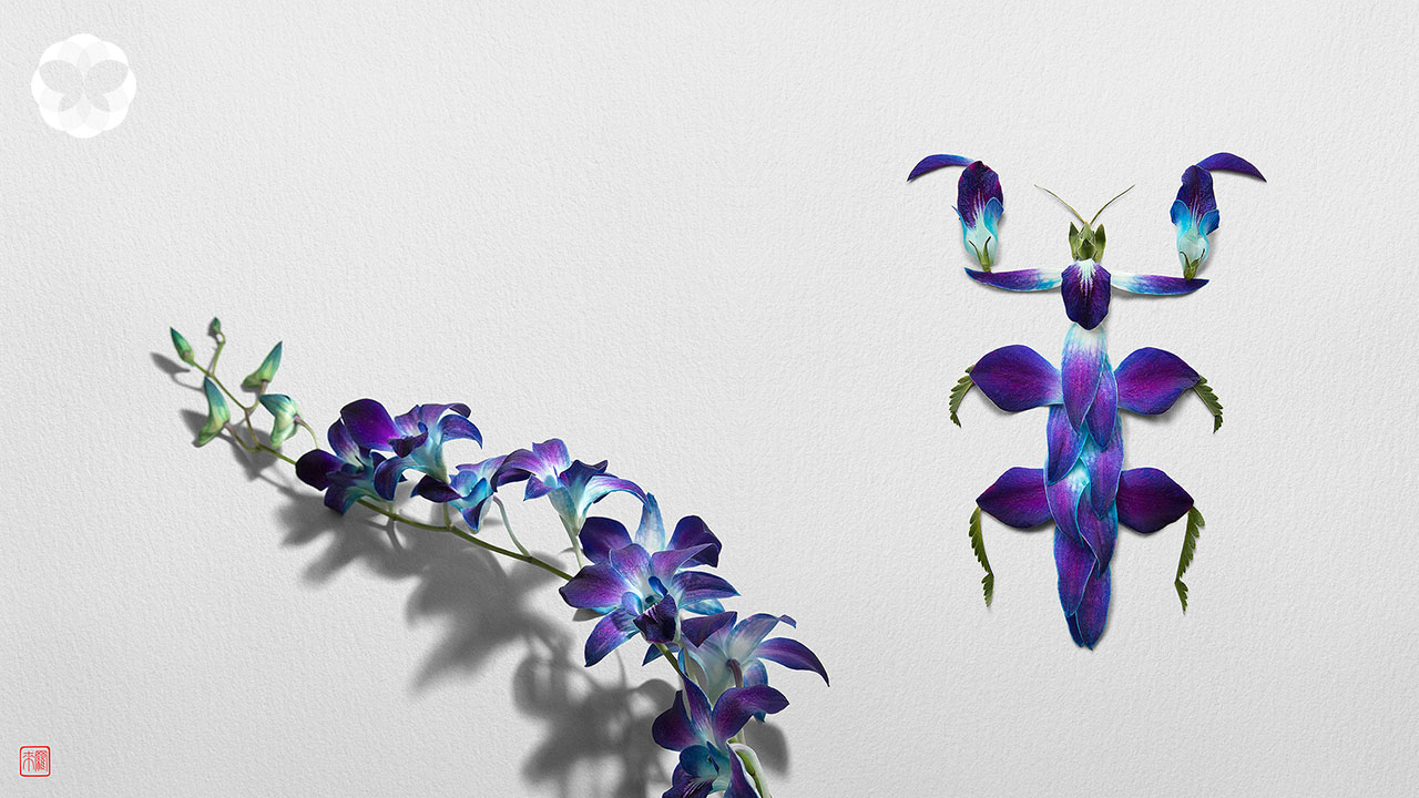 จากกลีบดอกไม้ร้อยสีสัน สู่เหล่าแมลงหลากชนิด