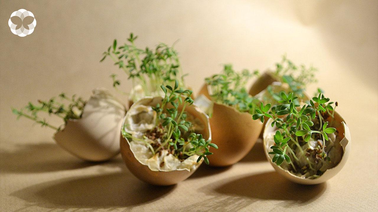 รวมเมนูเด็ดบำรุงต้นไม้ที่หาได้จากในครัว