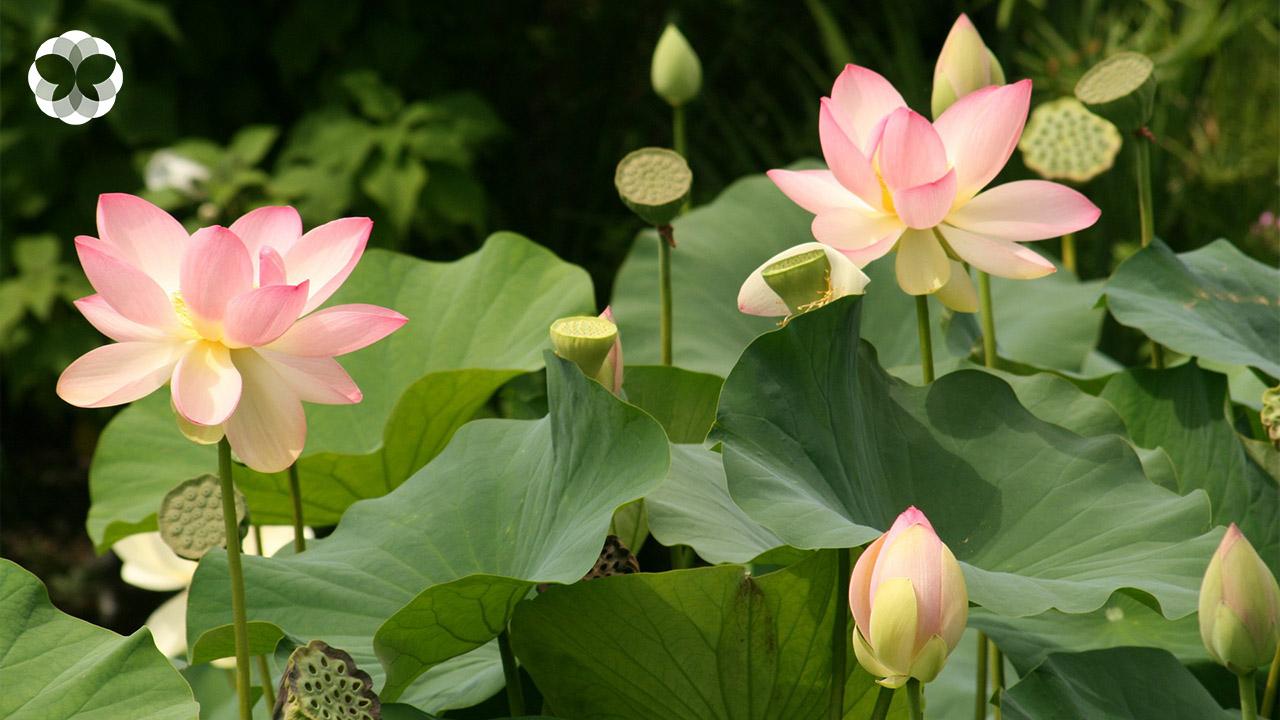 ดอกไม้บูชาพระ ดอกไหนกันนะเหมาะกับคำอธิษฐานของคุณ?